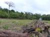 Odlesňovanie kvôli dobytku pod hniezdom