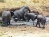 Africké Safari, ostrov Zanzibar a Kilimandžáro