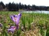 Jar na Krpáčove