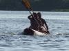 Uganda rafting
